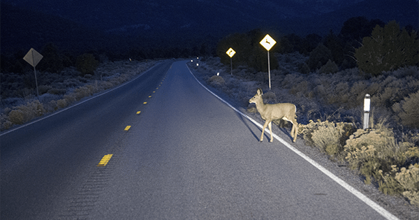 wildlife safety driving