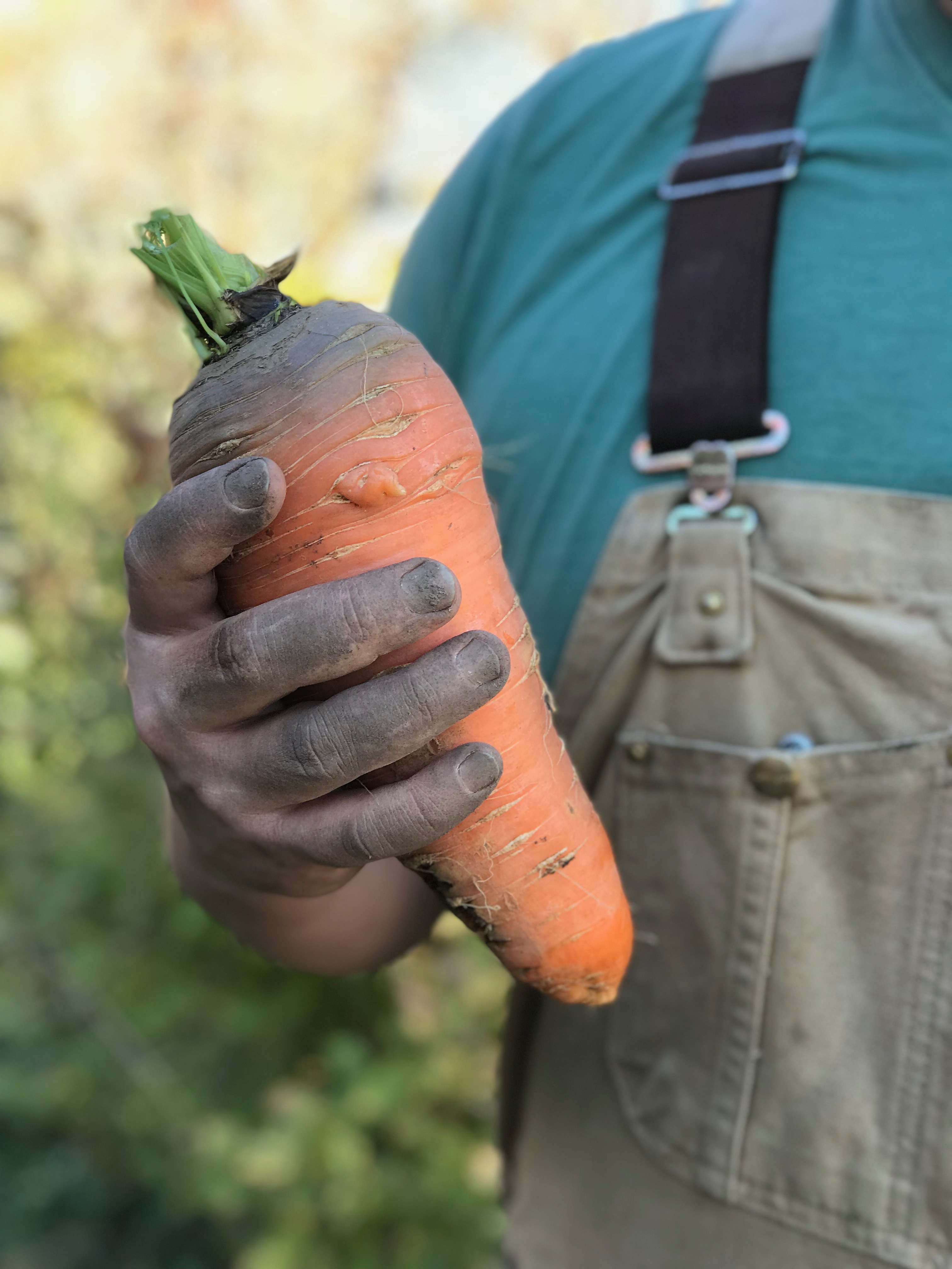 Karl holding one of the carrots he grew on his farm