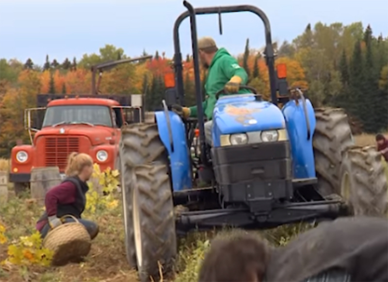 Harvest Break in Aroostook County Where Kids Get Three Weeks Off School Each Fall to Help With the Harvest