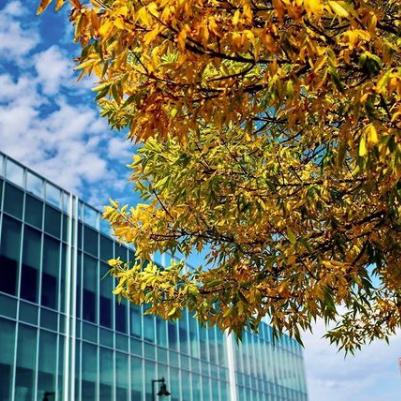Celebrating fall colors at WEX!